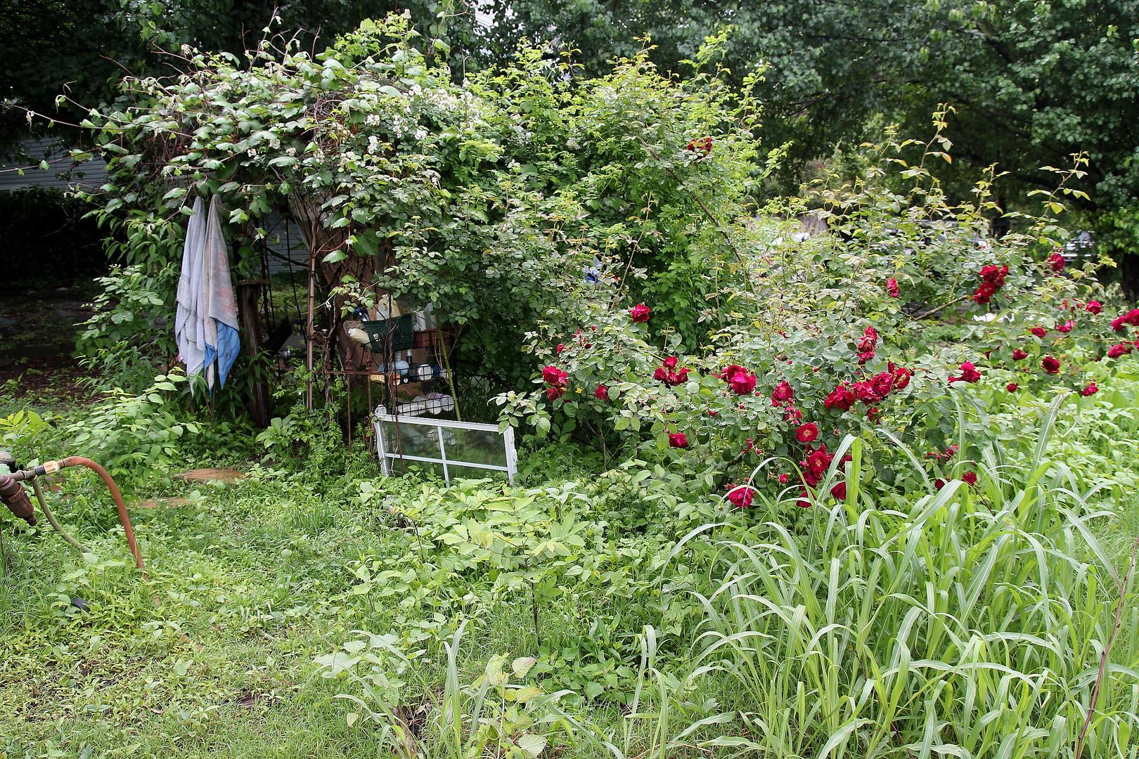 Garden of Eden
