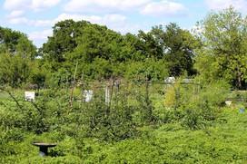 Garden of Eden1.jpg
