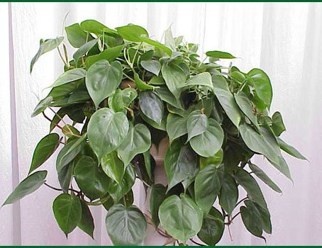 Top 5 Houseplants for Healthy Air
