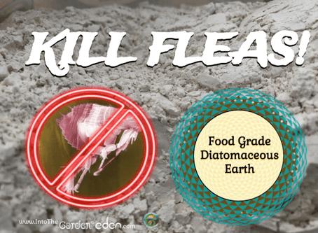 Use Food Grade Diatomaceous Earth to Kill Fleas