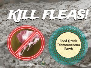 Garden of Eden Kill fleas with Diatomaceous Earth!