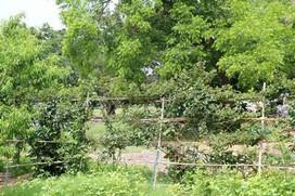 Garden of Eden5.jpg