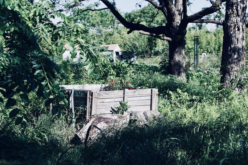 Garden of Eden8.jpeg