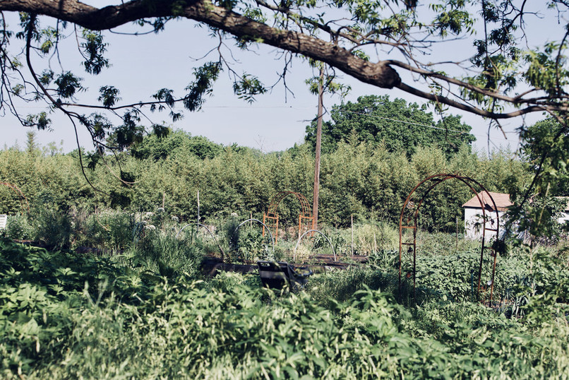 Garden of Eden9.jpeg