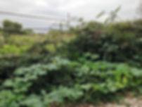 Garden of Eden2.jpg