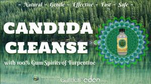 Candida Cleanse Garden of Eden 100% Gum Spirits of Turpentine