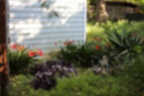 wee little garden.jpg