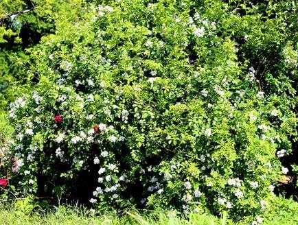 Garden of Eden12.jpg