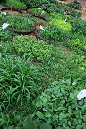 Garden of Eden7.jpg