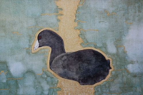 'Coot' by Mary Riley