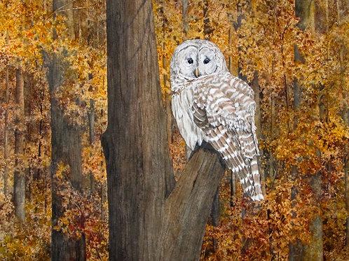 'Deep Woods' by J. A. Burst