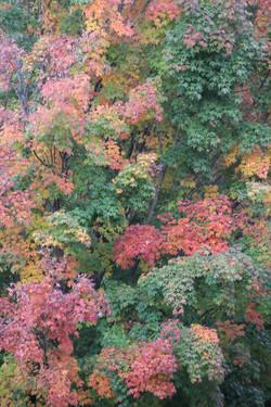 fall in full bloom