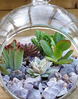 Glass Globe Terrarium Kit with succulent plants