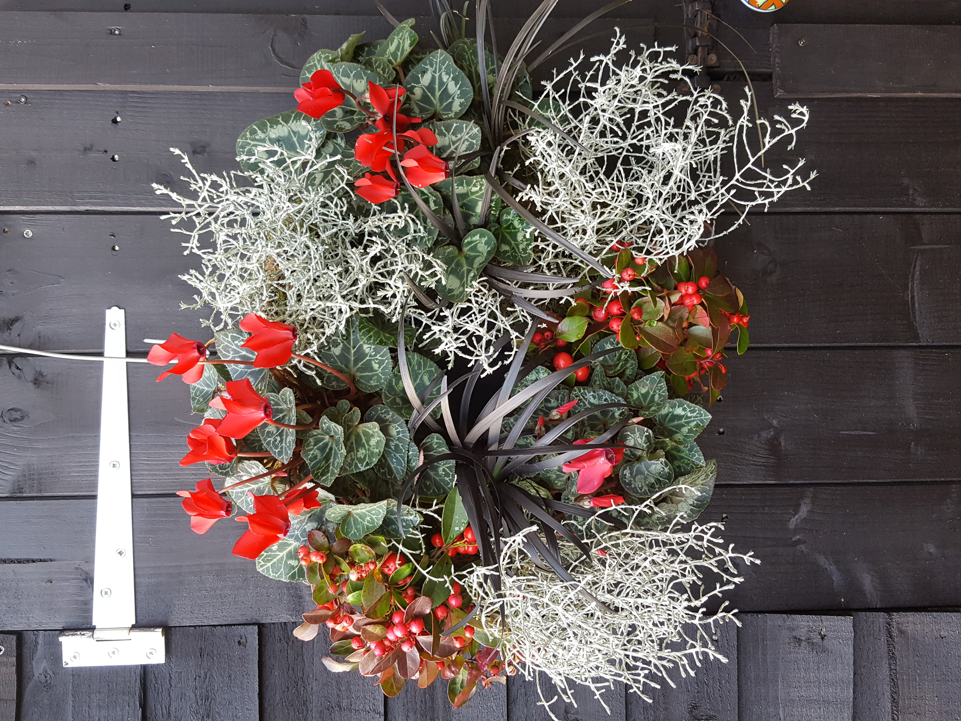 "12"" mixed winter planting £80"