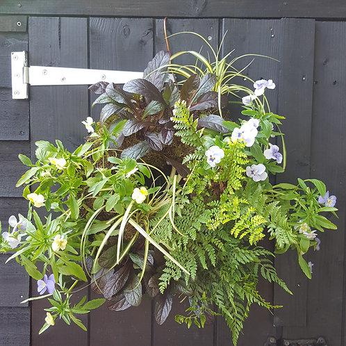 Evergreen & Viola