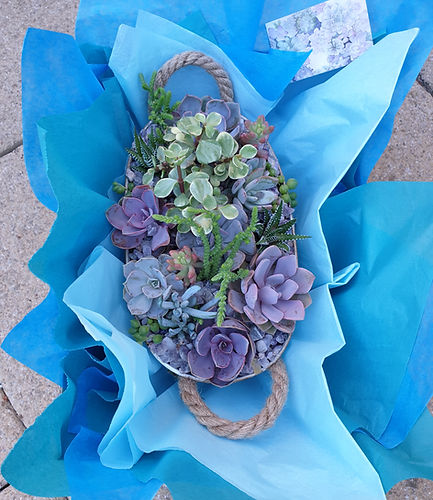 Succulent filled planter beautifully presented in colourful tissue paper ready for local d