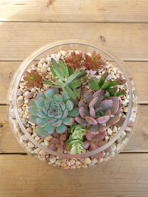 Succulent Filled Glass Bowl 18cm