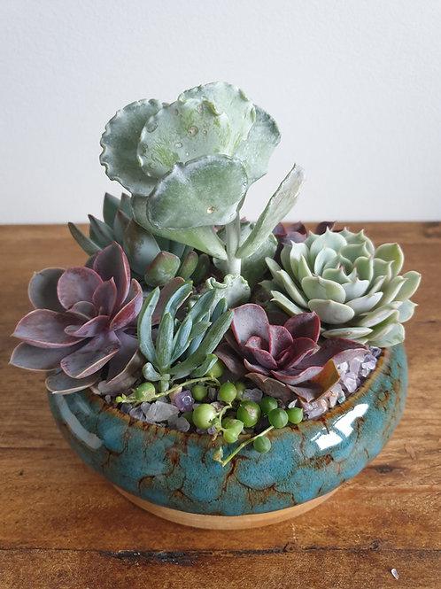 Succulent Filled Blue Glazed Planter