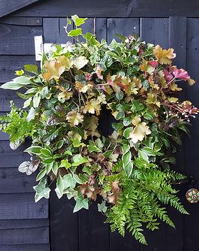 "16"" Shady corner, moss lined, living wreath with hosta, ajuga, ferns, heuchera and ivy"