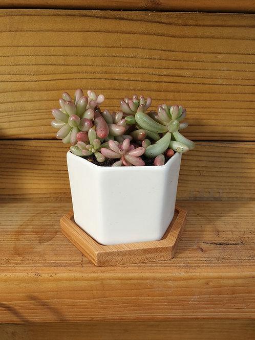 Hexagonal White Ceramic Succulent Pot