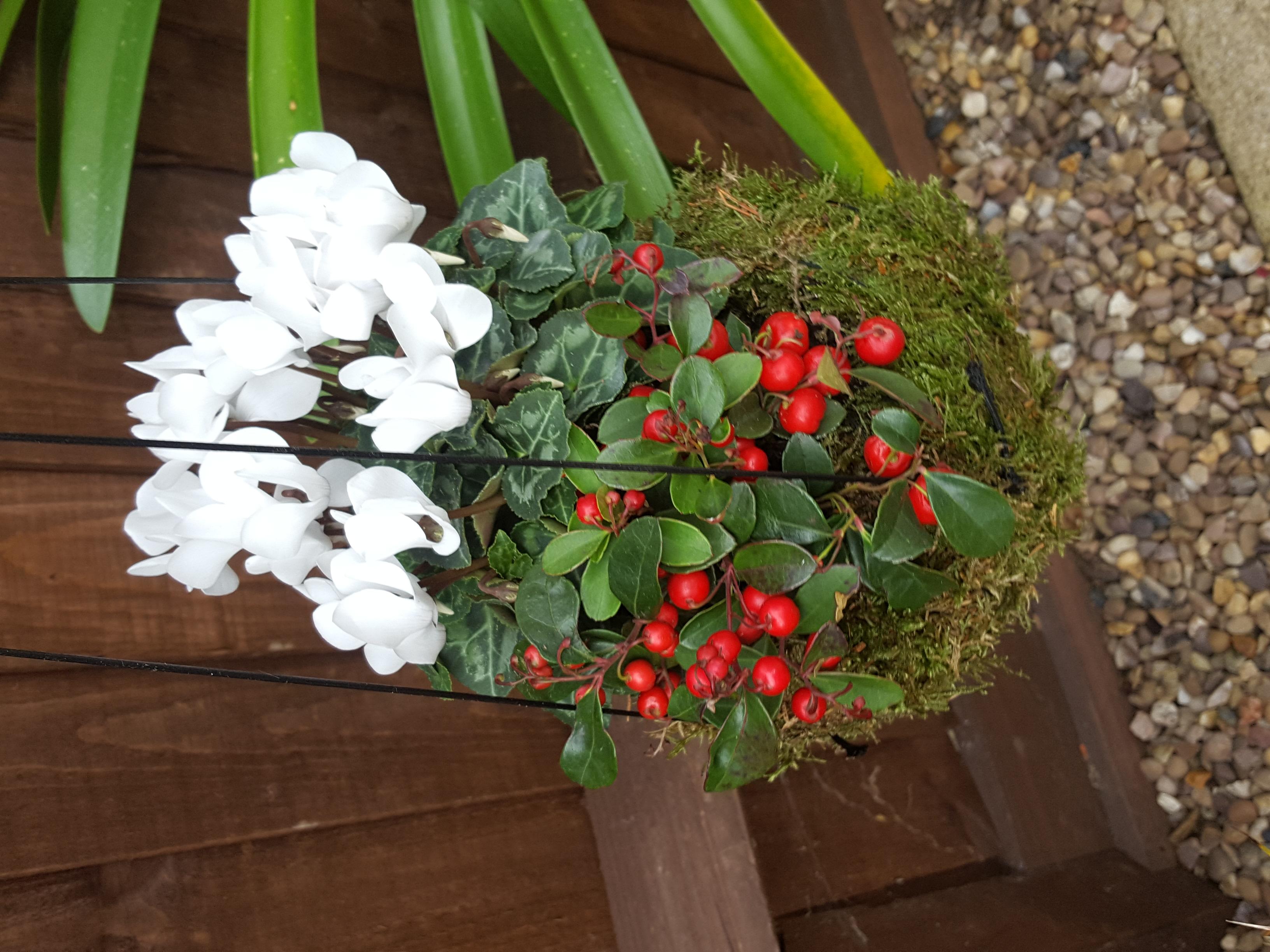 Mixed winter planting