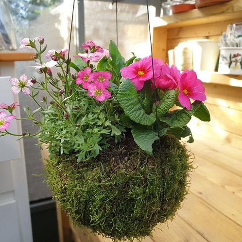 Spring Planted Kokedama
