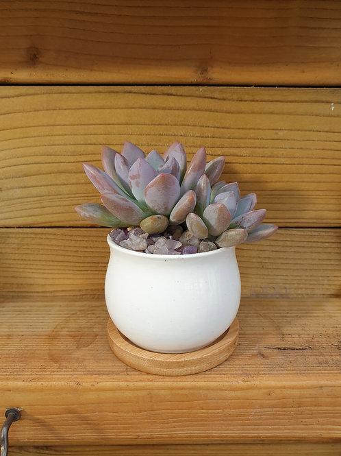 Bulbous White Ceramic Succulent Pot