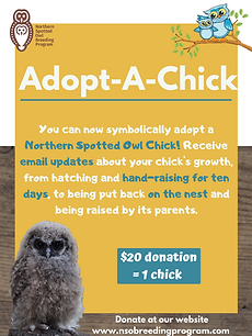 Adopt A Chick portrait.png