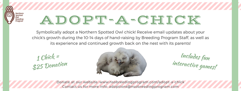 Adopt A Chick (Facebook Cover).png