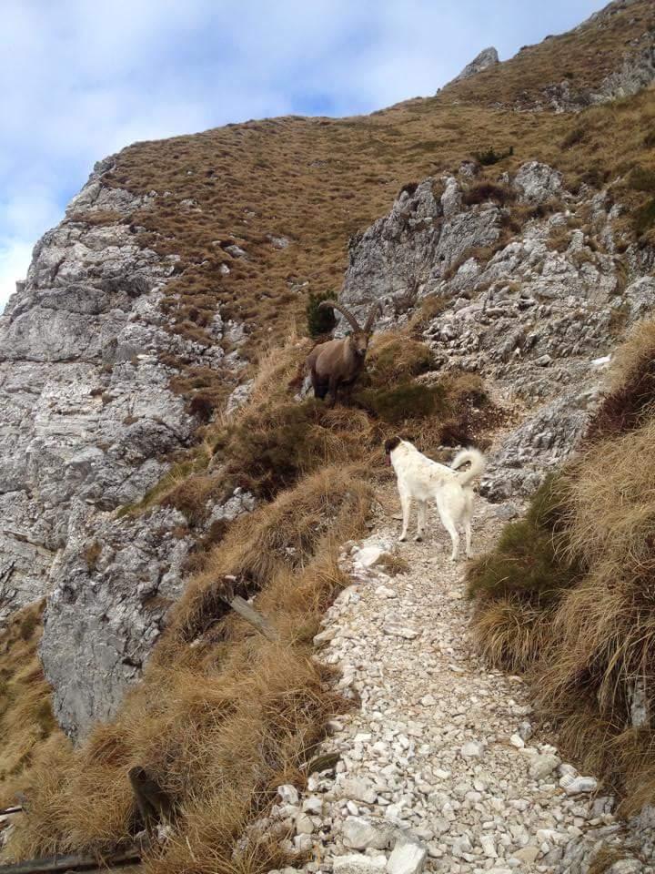 trail runners d'eccellenza