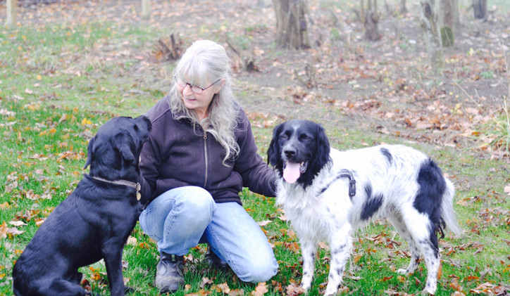 Mig og hundene