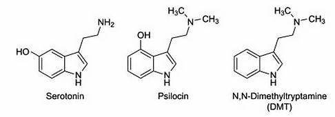 psilohuasca_chemical_comp.jpeg