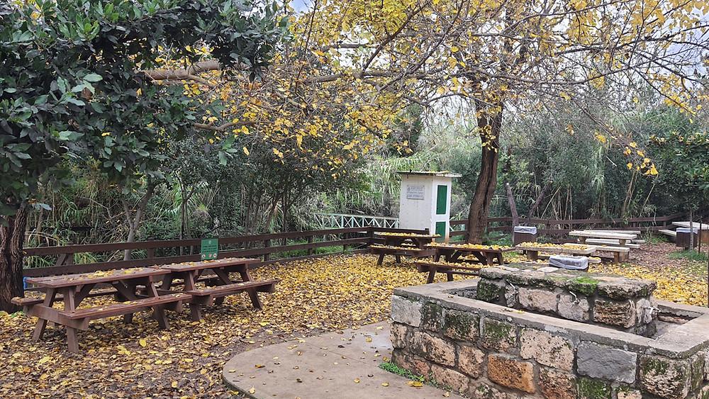 ספסלים ועצי דולב בכניסה לשמורת טבע תל דן