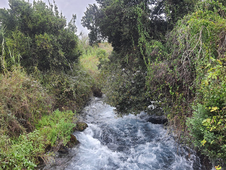 """טיול חורפי בשמורת תל דן - להרגיש חו""""ל בארץ"""