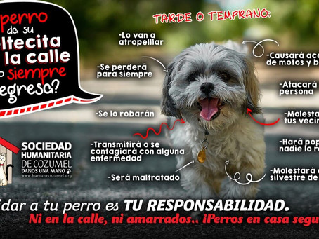 Ni en la calle, ni amarrados.. ¡Perros en casa seguros!