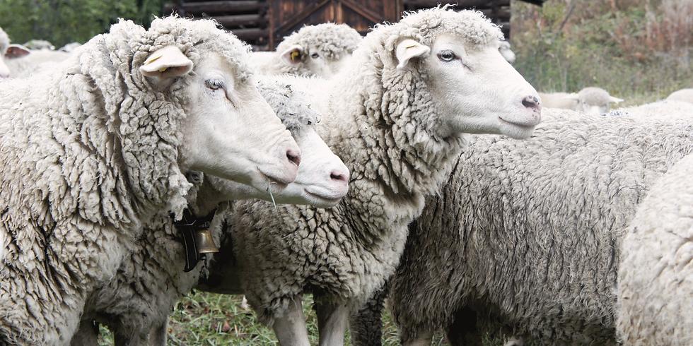 Der Weg der Wolle