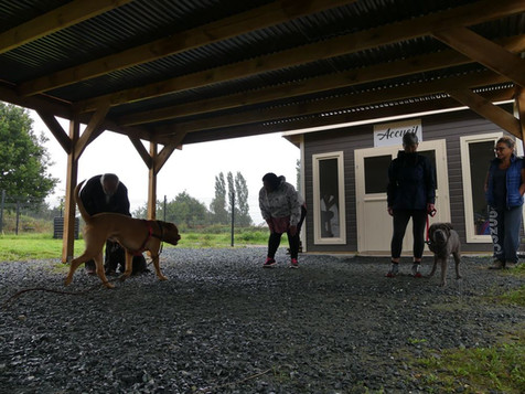 comportement du chien plesse loire atlan
