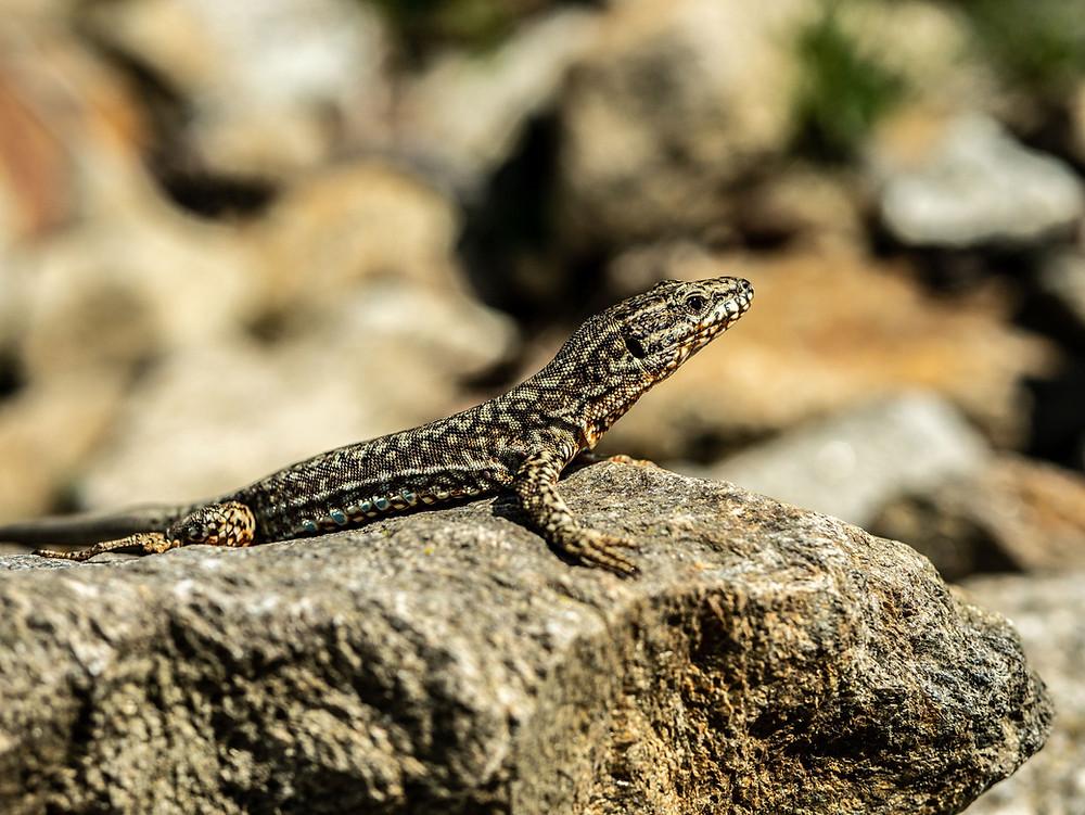 Alimentation des reptiles clinique Roosevelt Vannes