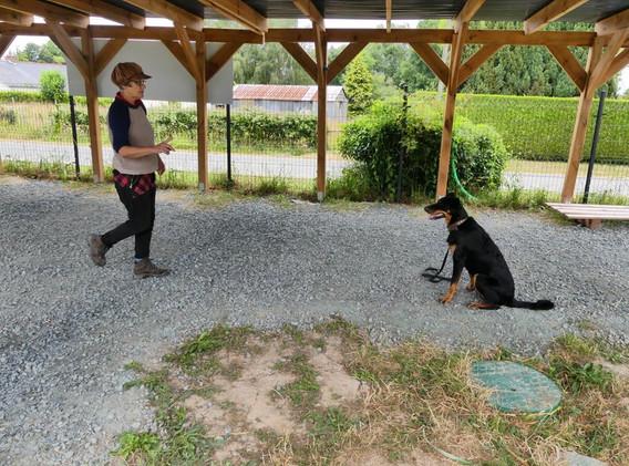 education du chien plesse loireatlantiqu