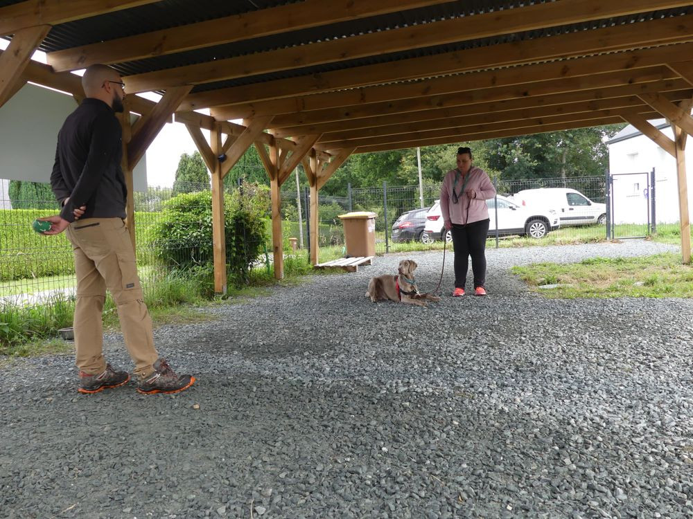 dressage canin plesse loire atlantique