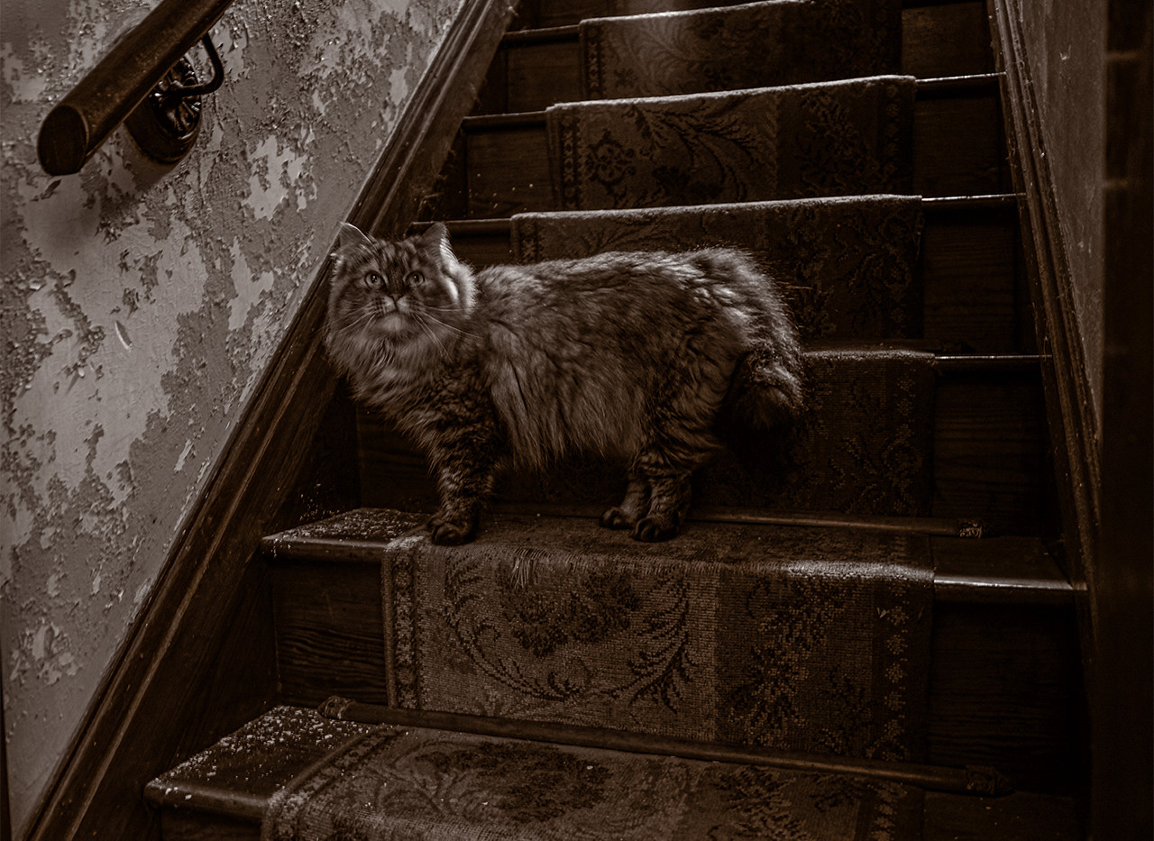 Kitty on a stairway