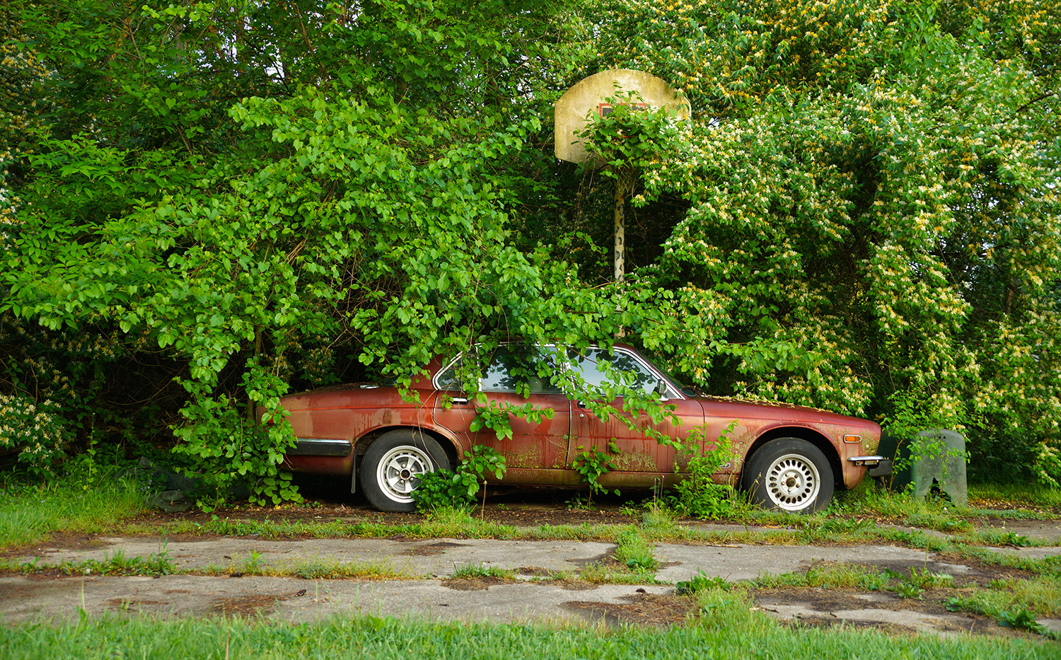 Abandoned Jaguar (color version)