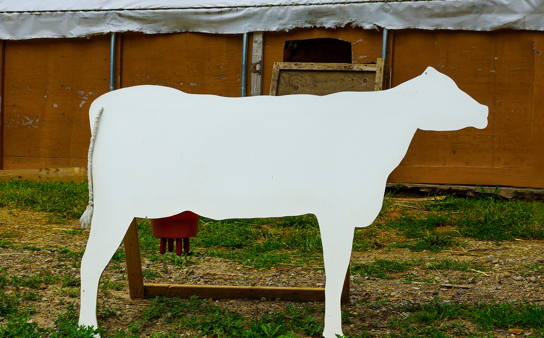 Fake cow, North fork, Long Island