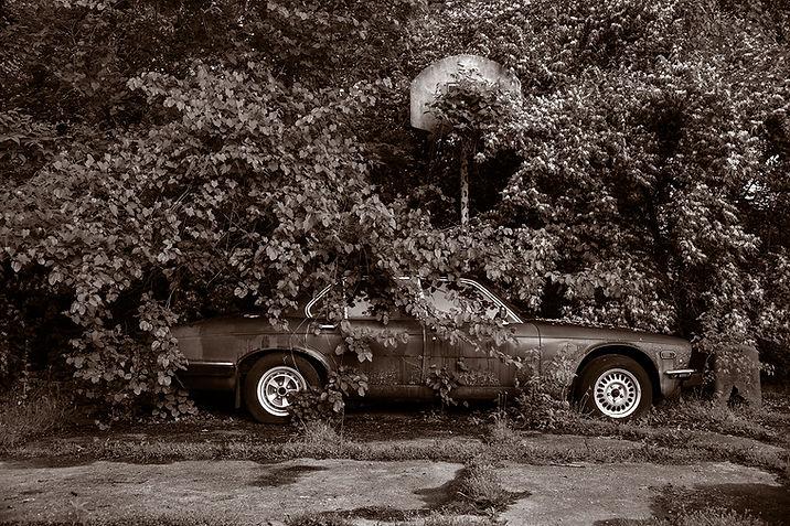 Abandoned Jaguar