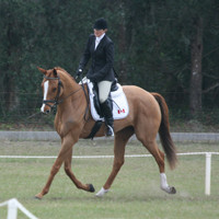 rocking horse ht2008 008.jpg