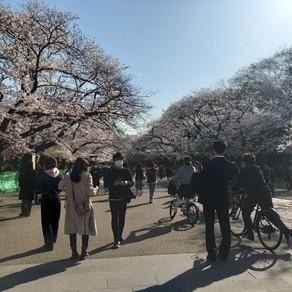 ¿COMO SE VIVE LA CONTINGENCIA SANITARIA EN JAPON?