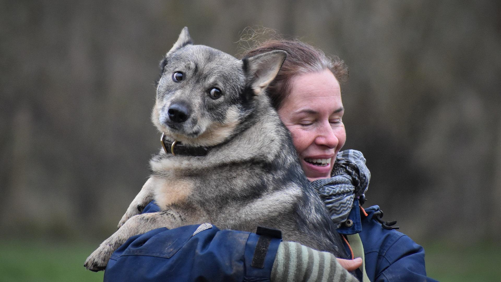 professionel hundelufter