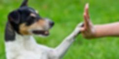 Hund der giver high five. Hundetræning. Hellerup Dog Walk. Pack Walk. Hundebørnehave. Hundehave. Professionel hundelufter. Hundeluft. Hundelufter i københavn. Daycare for dogs. Doglover. Hundekærlighed.