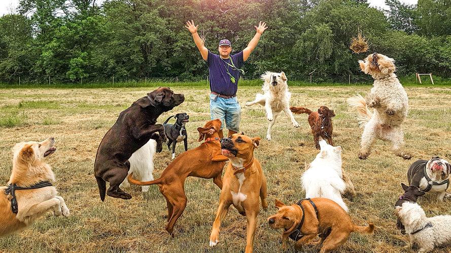 Hellerup Dog Walk's Hundebørnehave