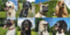 8 anmeldelser af Hellerup Dog Walk's professionelle hundeluft hundehave og hundebørnehave i København nordsjællnd og frederiksberg
